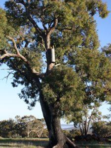 Landcare SJ COCKATUBE ® nest box for black cockatoos in tree