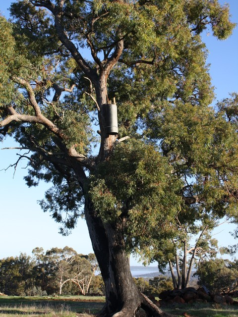 Landcare SJ COCKATUBE ® nest box for black cockatoos in tree