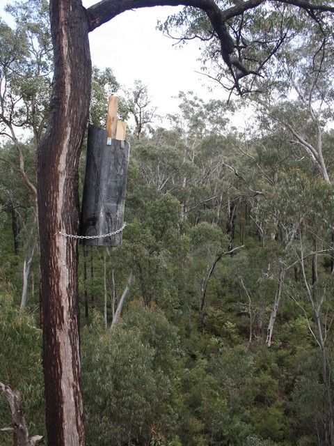 COCKATUBE ® nest box for black cockatoos attached to tree trunk